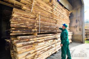 Kontrola jakości drzewa- zdjęcia reklamowe